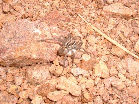 Découverte de l'Estérel L'araignée